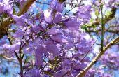 Lente paarse bloeiende bomen
