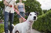 Hoe lang duurt het voor de honden poep te ontbinden?