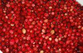 Cranberry voor urineweginfectie bij honden