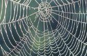 Hoe maak je een spinnenweb van draad