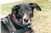 Bloederige ontlasting bij honden