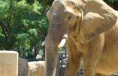 Hoe teken je olifant oren