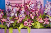 Hoe te verwijderen van de schaal over orchideeën
