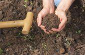 Gewassen die in de Haspengouwse bodem groeien