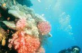 Wat voor soort zee wezens leven in een tropische oceaan?