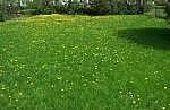 Hoe te maaien gras als een Pro