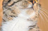 Symptomen van een kat interne schade