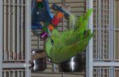 How to Build een vogelkooi van Plexiglas