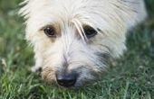 Dingen om te kalmeren de maag van een hond