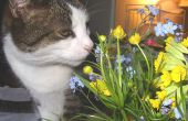 Loratadine dosering voor katten