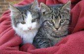Tekenen van huidkanker bij katten