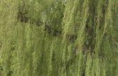How to Build een rustieke Twig Arbor