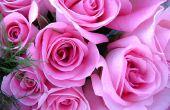 Over het kweken van rozen commercieel