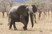 Bedreigde dieren in de savanne
