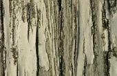 Ziekten van de boom met witte beschimmeld spul
