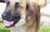 Over ernstige jeuk & braken bij honden