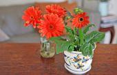 Hoe de zorg voor een Gerbera Daisy Plant