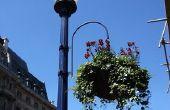 De beste overblijvende hangende bloemen