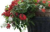 Het rangschikken van bloemen in een plantenbak