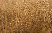 Namen van planten die in graslanden leven