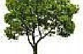 Hoe water boomwortels met behulp van een PVC-pijp
