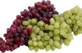 Waarom zijn de druiven aan de wijnstok te sterven?