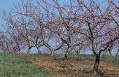 How to Make Organische Fruit Tree Spray