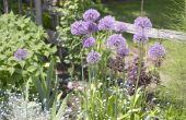 8 kruiden om uw culinaire tuin groeien