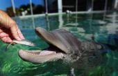 Waarom heet Mahi Mahi een dolfijn?