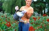 How to Grow rozen in Zuid-Californië