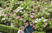 How to Install elkaar grijpende Edger voor een tuin