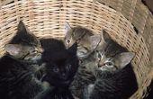 Voel je elke beweging als een kat zwanger Is?