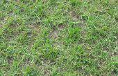 Bruine plekken in het gazon & wormen