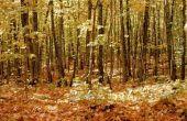 Voedselweb van de bladverliezende wouden