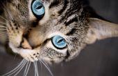 Hoe maak je zelfgemaakte Cat Spray geur Remover