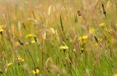 De beste tijd om te planten rogge gras in Texas