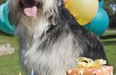 Hoe maak je een hond traktatie Cake met geen bloem