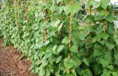 How to Build verticale tuin groenten