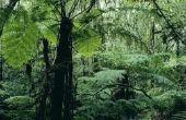 Tropische bladverliezende wouden dieren & planten