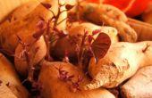 How to Grow een wijnstok van zoete aardappel