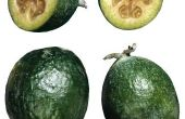 Het verschil tussen een Guayaba en een Guava