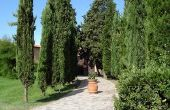 Italiaanse Cypress Plaatsvervanger