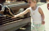 Hoe leren kinderen over dieren