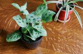 Hoe te stoppen met schimmel groei op kamerplanten