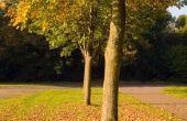 Het gebruik van bestrijdingsmiddelen rond bomen