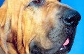 Verslapte huid op honden