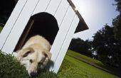 Symptomen van koliek bij een hond