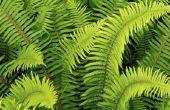 Wat doet kalium voor planten?