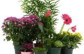 Effecten van waterstofperoxide op planten