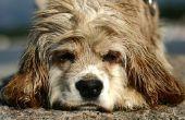 Voeding voor honden met droog haar